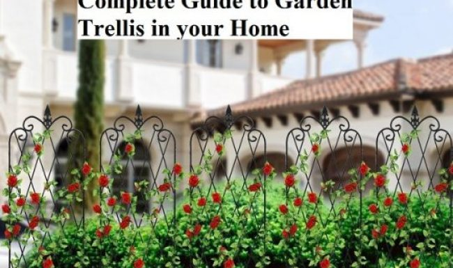 Complete Guide to Garden Trellis in your Home