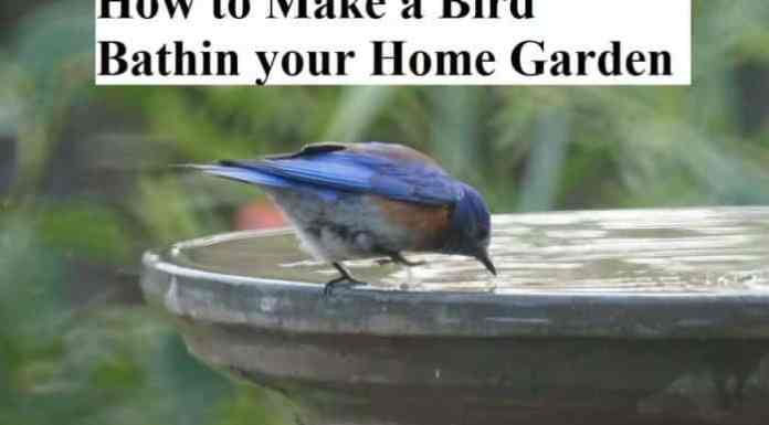 How to Make a Bird Bathin your Home Garden