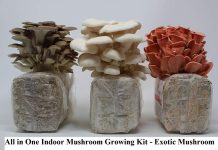 All in One Indoor Mushroom Growing Kit - Exotic Mushroom