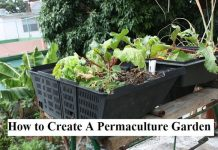 How to Create A Permaculture Garden