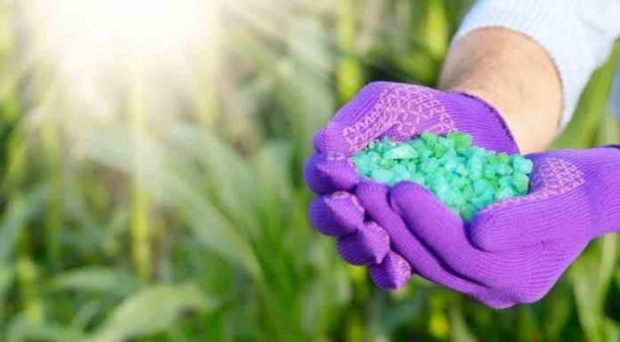 Is Fertilizing Necessary, and How Much Is Needed