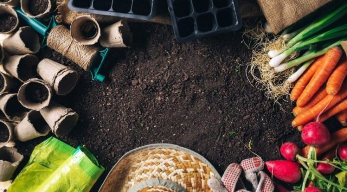 Vegetable Gardening Guide – WHAT TO GROW (AND HOW MUCH)