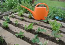 6 Time Saving Tips For Gardening Home