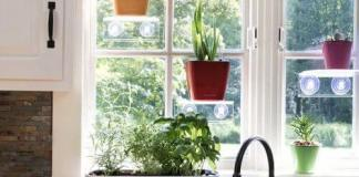 An Indoor Herb Garden Kit Produces Food And Medicine
