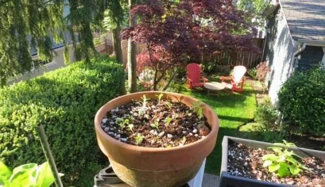 Best 12 Ideas for your Edible Garden