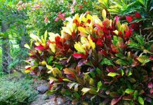 Top 5 Tropical Plant Trends for 2020