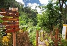 Botanical Gardens in Ocho Rios Jamaica