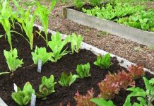 05 Ways to Get your Vegetable Patch off to a Great Start