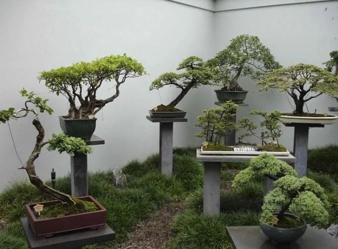 Guide for Growing a Bonsai