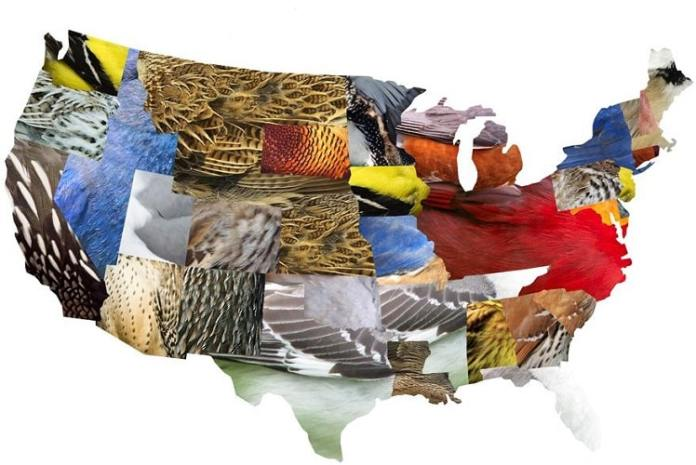 50 State Birds United State Of America