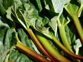 How to Grow Rhubarb in Your Garden
