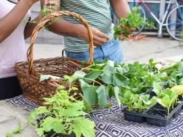 Best 07 Vegetables Selection for Garden Growers