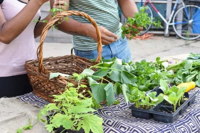 Top 07 Plants Selection for Garden 2020