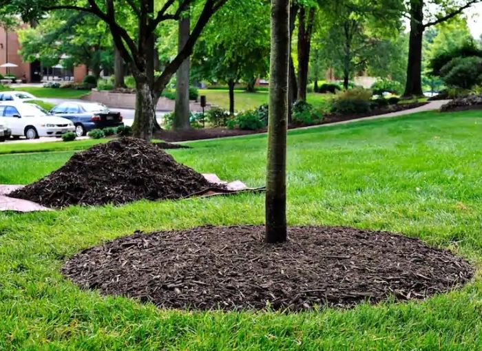 Trees and Transplant Shock | GARDENS NURSERY