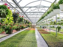 What's a Tree & Plant in Grower Nursery