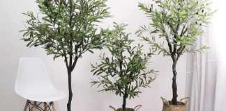 Olive Gardening - Growing Garden Olive Trees