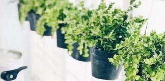 home hanging plants pots