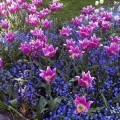 These combination plantings give you two layers of color and a longer
