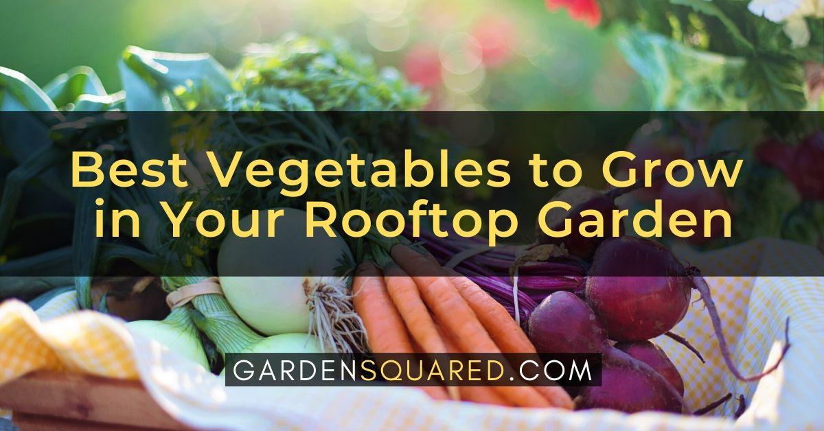 Grow Vegetables Rooftop Garden