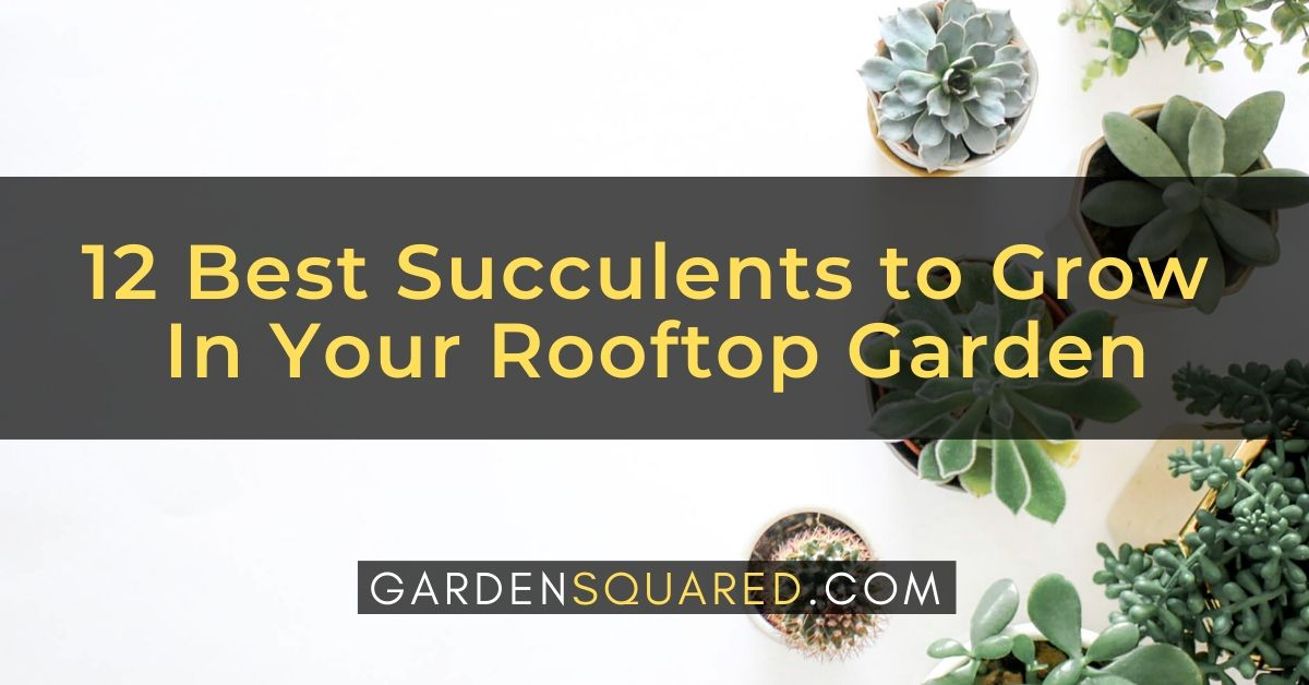 Best Succulents To Grow In Rooftop Garden