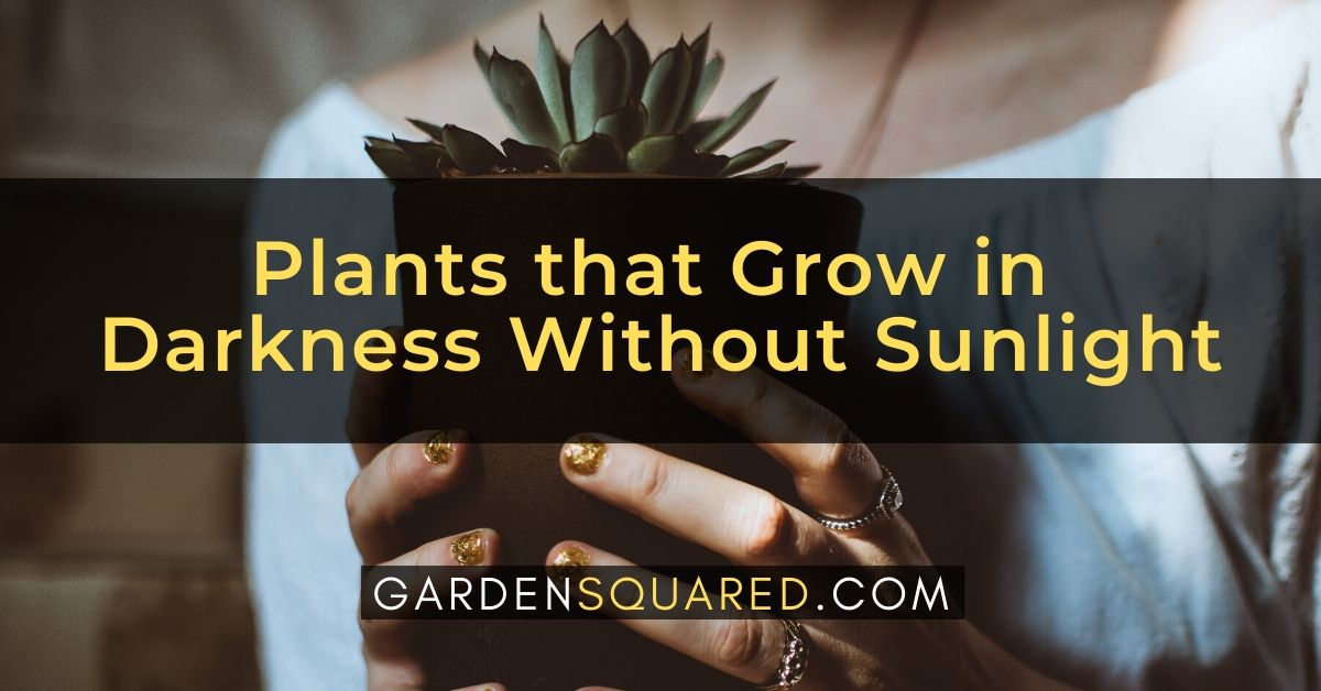 Plants Grow In Darkness Without Sunlight