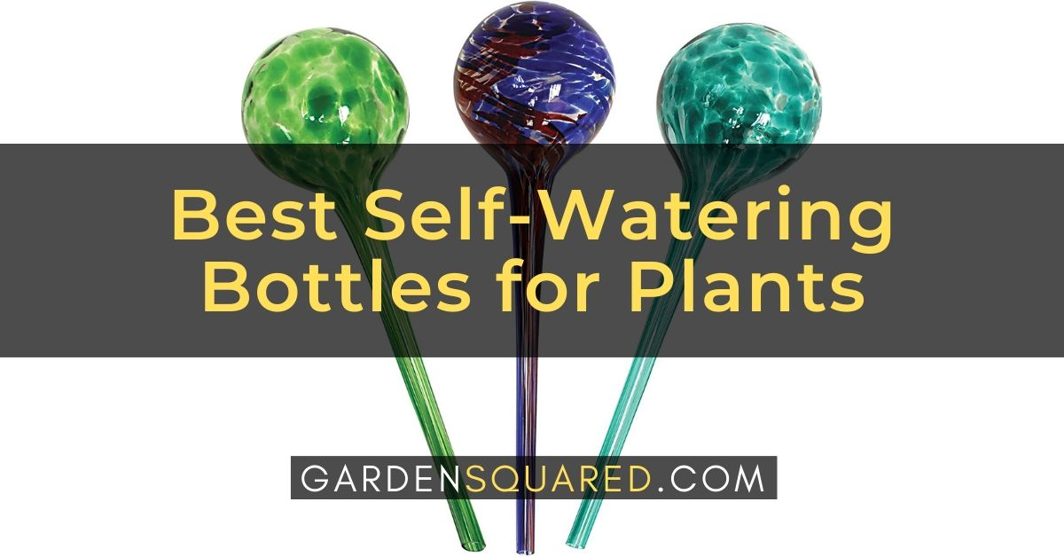 Best Self Watering Bottles For Plants Reviews