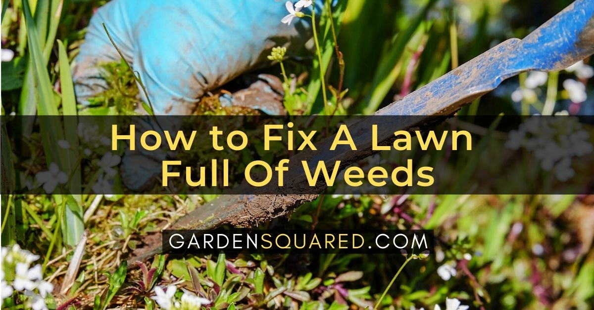 How to Fix A Lawn Full Of Weeds