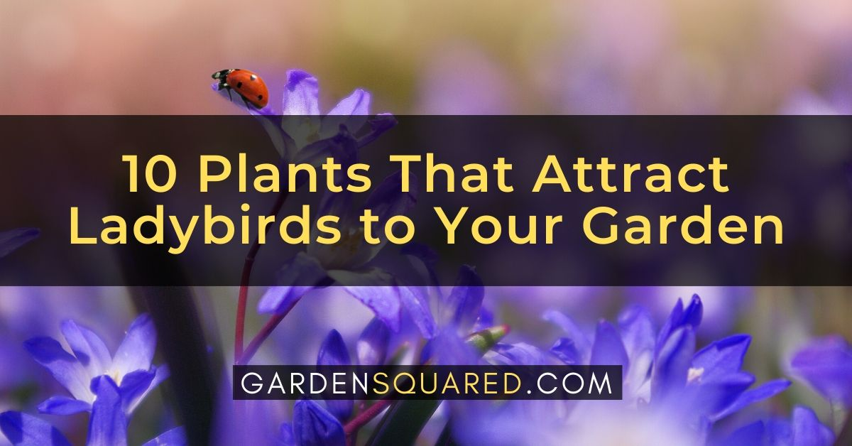 10 Plants That Attract Ladybirds To Your Garden