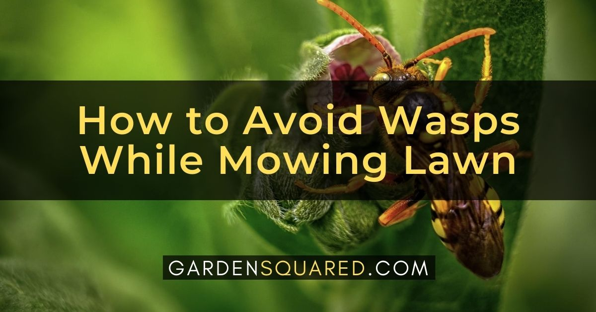 How To Avoid Wasps While Mowing Lawn