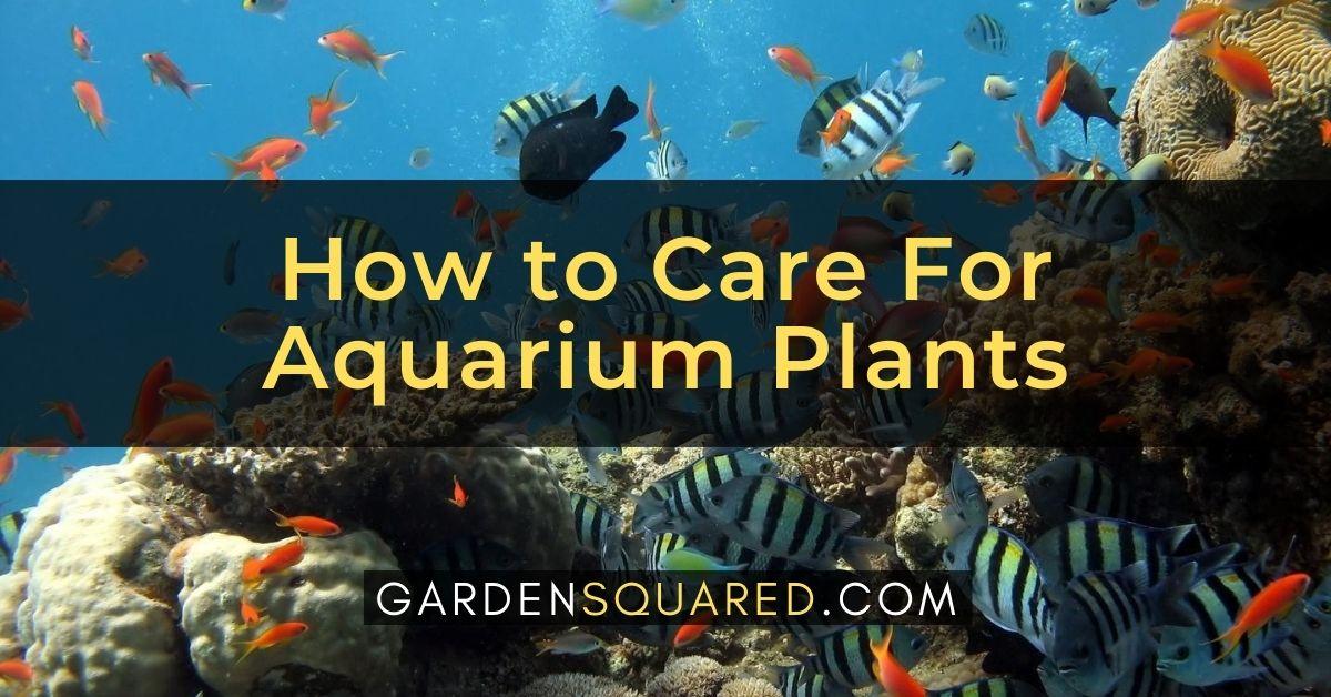 How To Care For Aquarium Plants