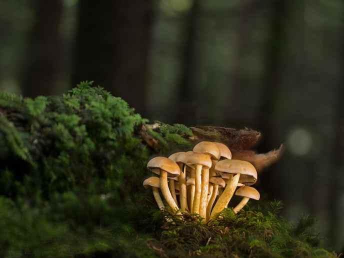 wild mushrooms growing on a log