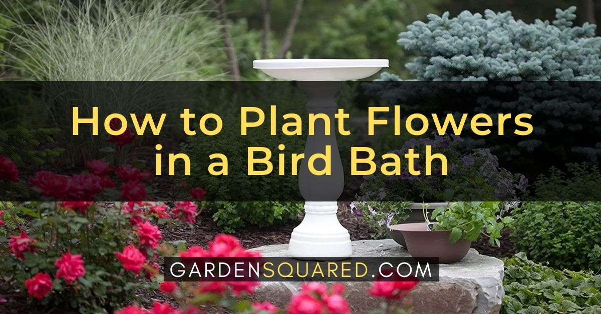 How To Plant Flowers In A Bird Bath