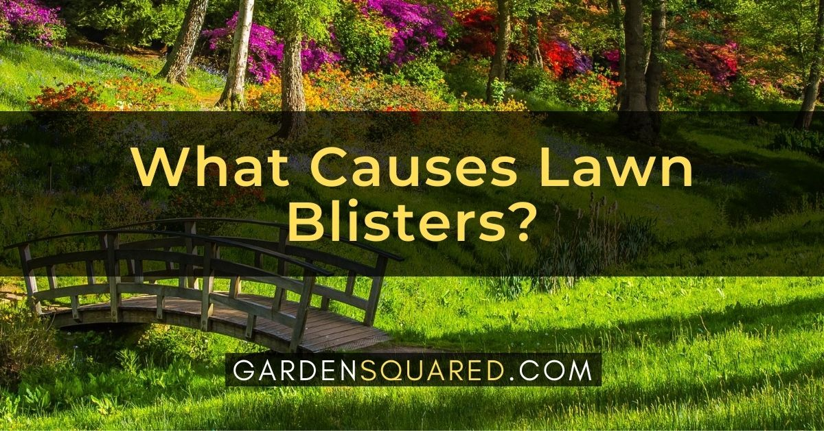 What Causes Lawn Blisters Guide To Water Bubble Trapped Under Grass