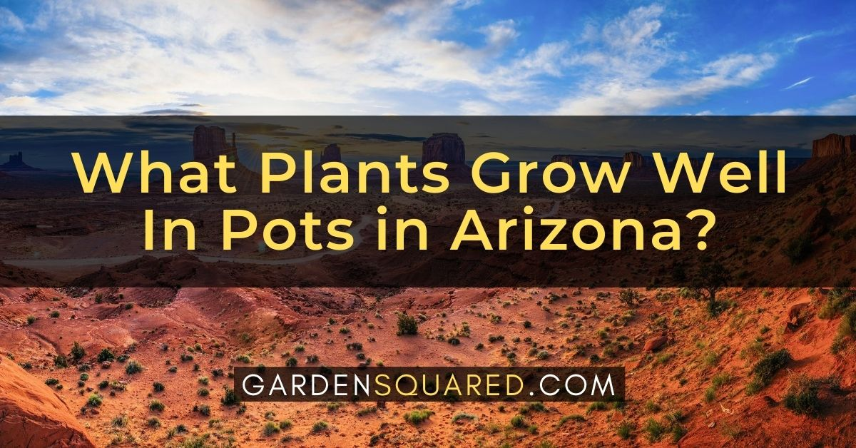 What Plants Grow Well In Pots In Arizona