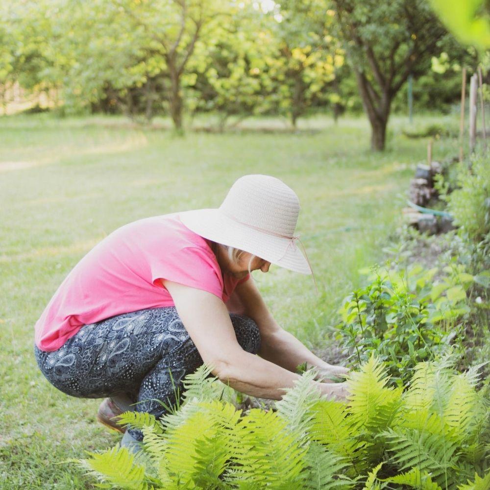 Weeding and Feeding Lawn