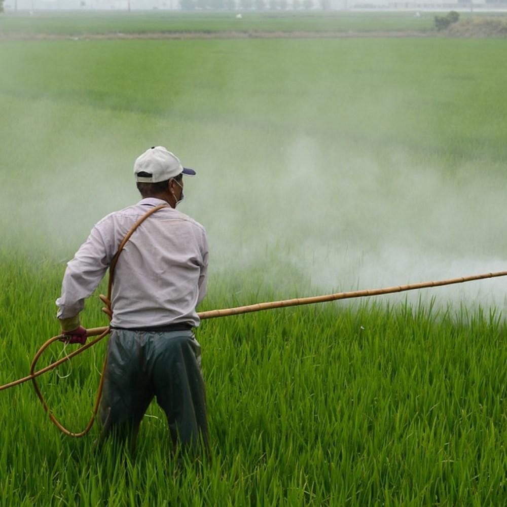 Eliminate Ryegrass by Spraying