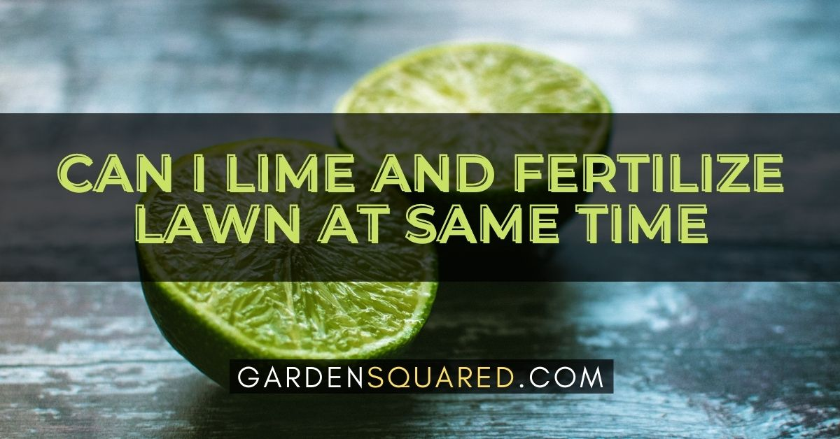Can I Lime And Fertilize Lawn At The Same Time
