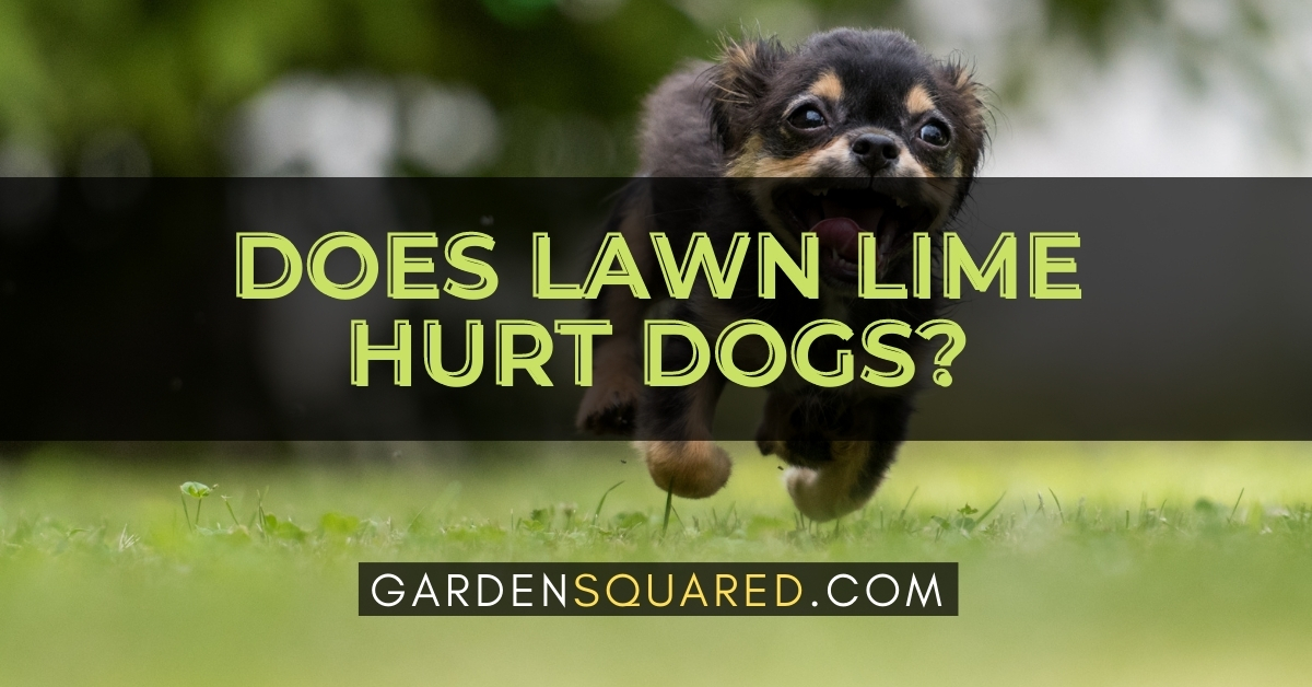 Does Lawn Lime Hurt Dogs