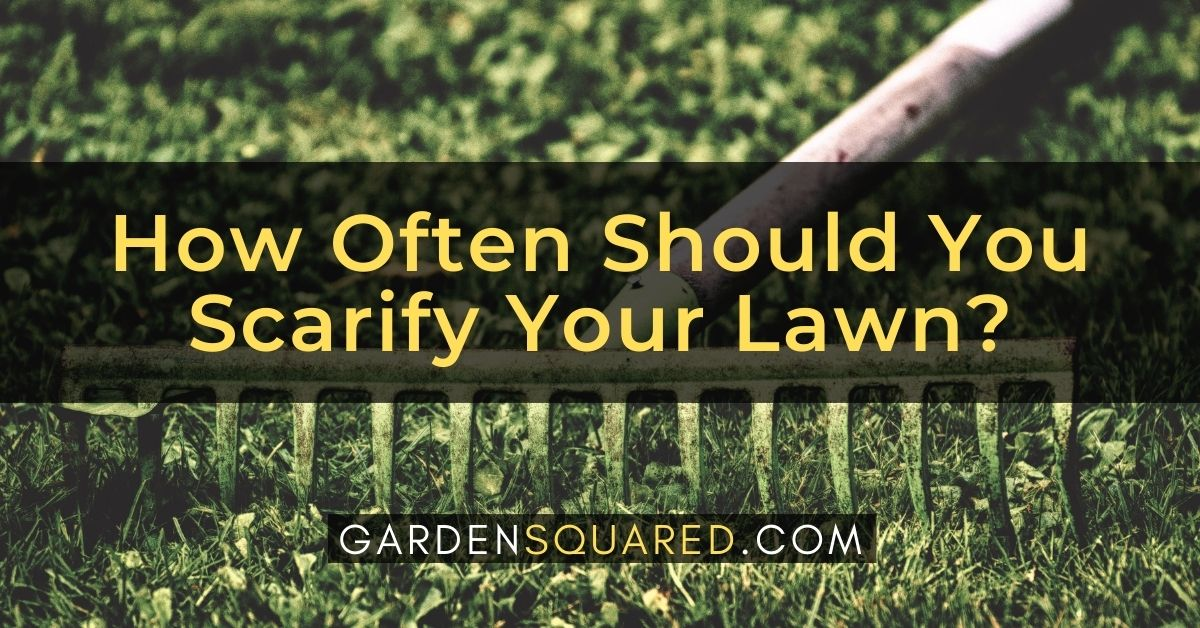 How Often Should You Scarify Your Lawn
