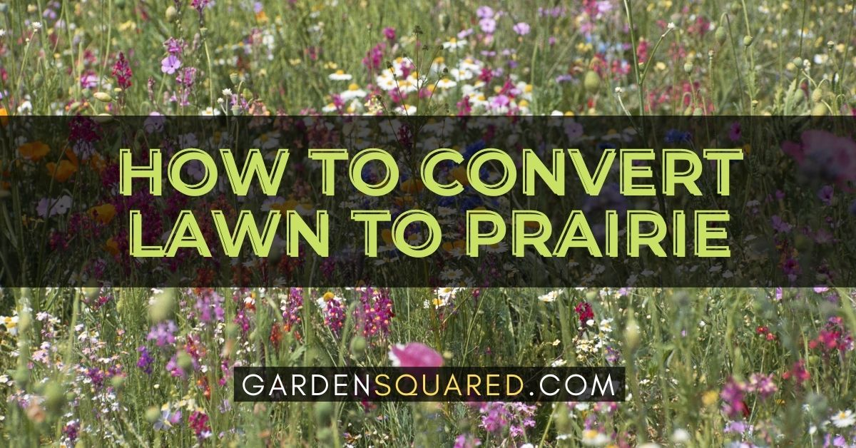 How To Convert Lawn To Prairie