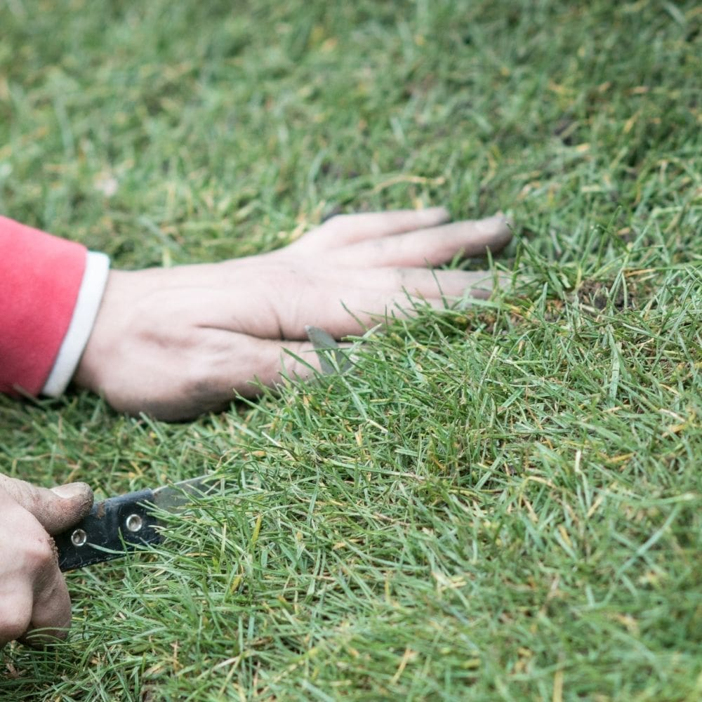 Use Your Hand to Press the Lawn