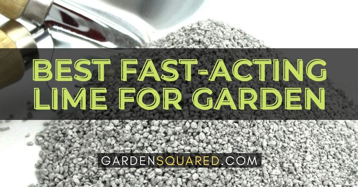 The Best Fast Acting Lime For Garden