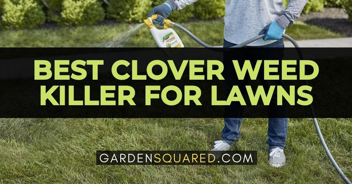 The Best Clover Weed Killer For Lawns