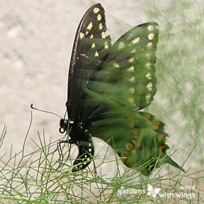 The Mysteries of  a Butterfly's Life