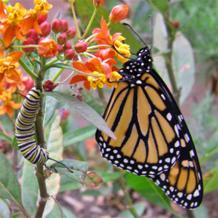 4 Actionable Tips To Attract Butterflies To Your Garden