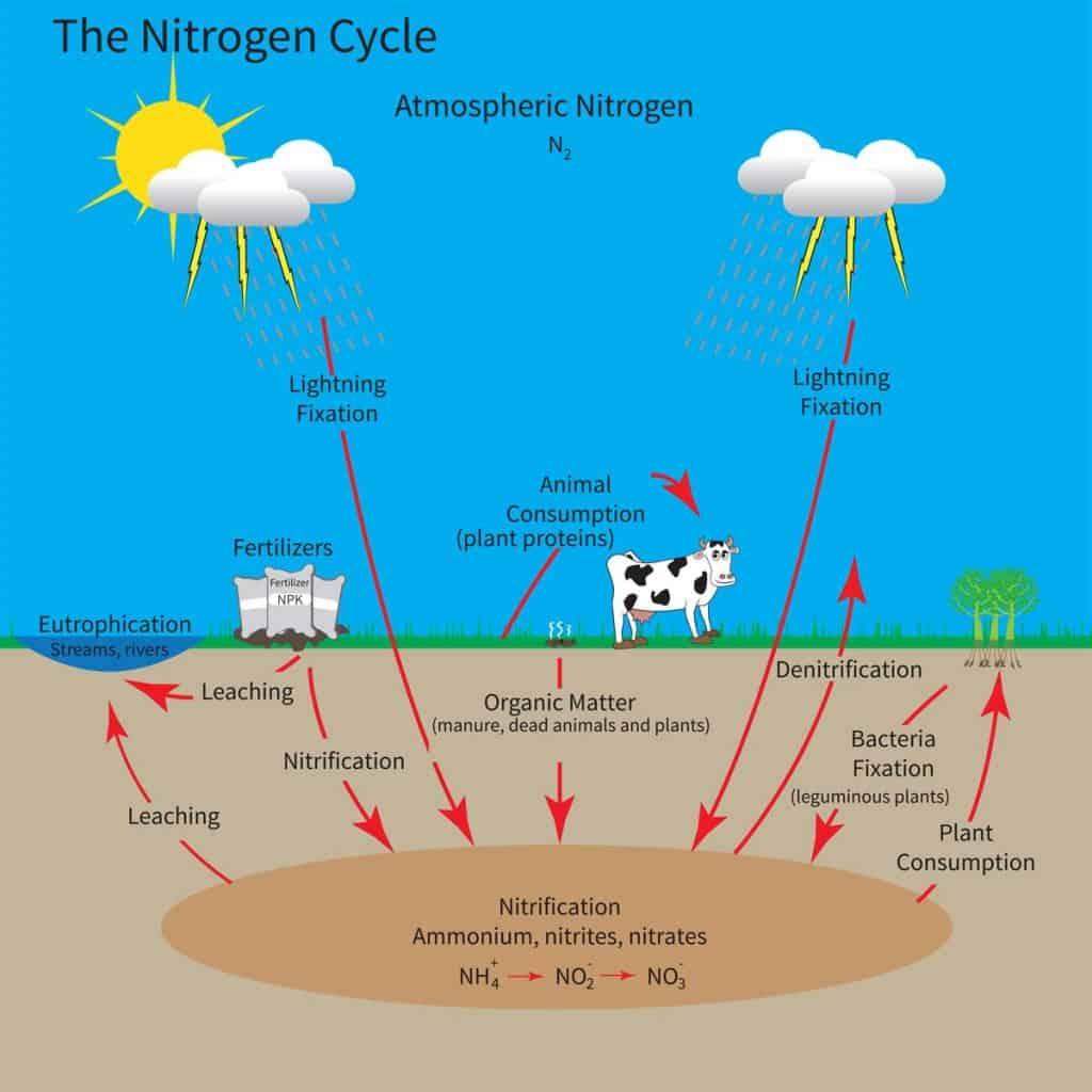 How Do Plants Use Nitrogen