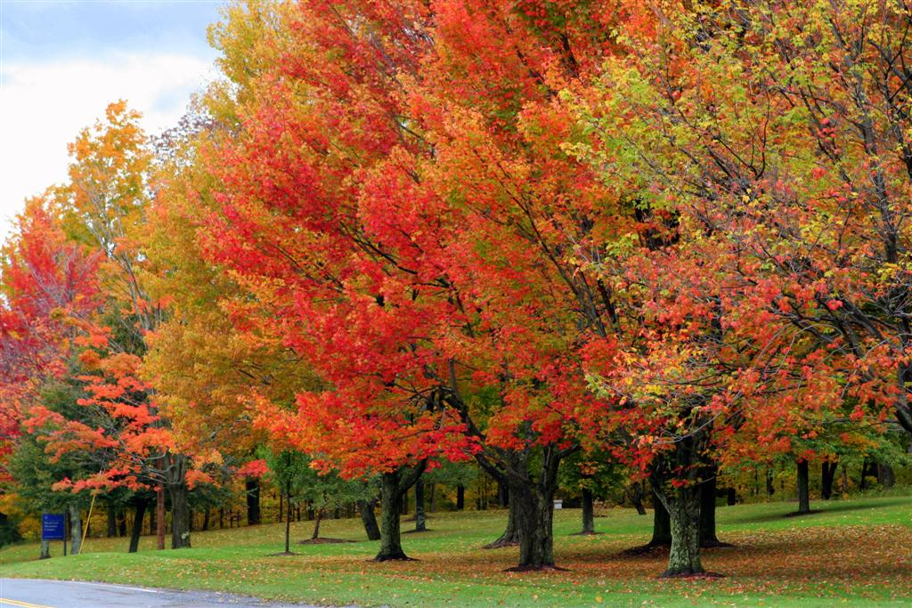 Falling Leaves Wallpaper Blackberry The Fall Foliage Of Vermont S Green Mountains Garden
