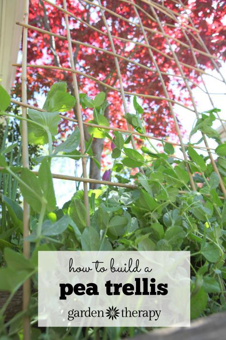 How to Make a DIY Bamboo Trellis