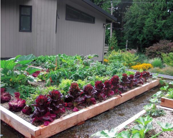 Grow Up! Build An Edible Rooftop Garden Garden Therapy