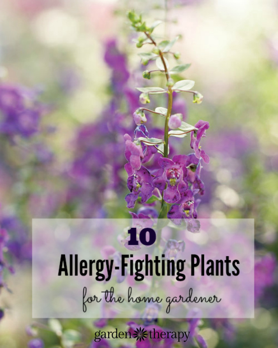 Image Result For Indoor Plants For Allergy Sufferers